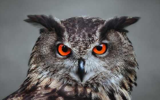 сова, оранжевыми, глазами