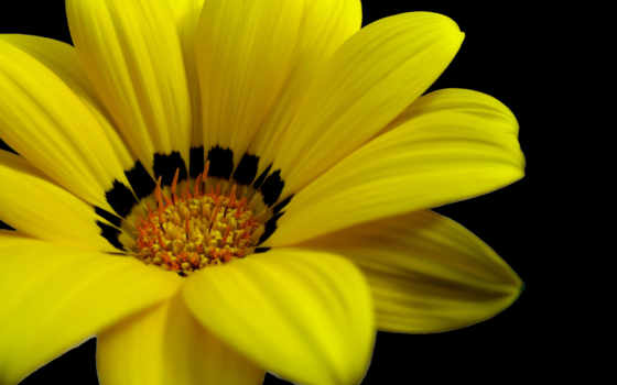 цветы, yellow, клипарт