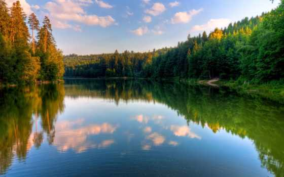 summer, природа, поле