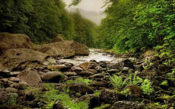 река, лесная, landscape