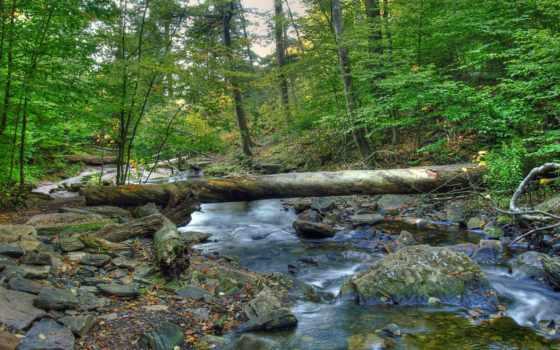 лес, log, река, камни, crossing, landscape, природа,