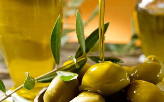 нефть, оливки, оливкового, масла, картинка, оливковое, branch,