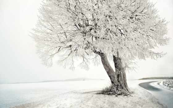 inverno, sfondi, neve