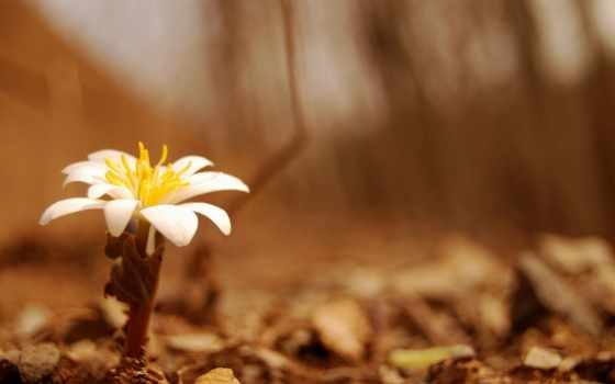 макро, нью, lisandru, geanina, citate, цветы, frumuseţea, ай, decat,