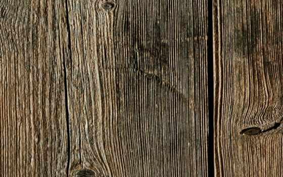 древесина, ствол