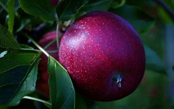 fonwall, другие, собранный, free, качество, apple