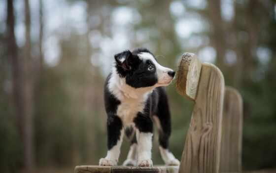 собака, animal, камень, морда, ложь, кот, white, красивый, щенок, side