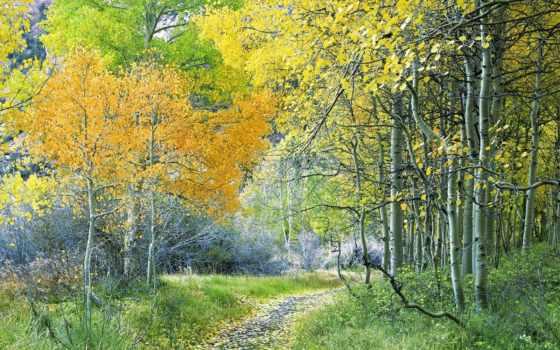 лес, природа, зелёный