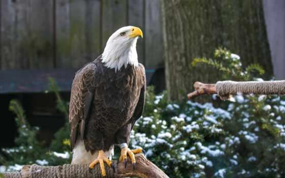 орлан, птица, клюв Фон № 100925 разрешение 2560x1600