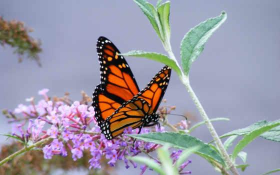 бабочки, бабочка, насекомые