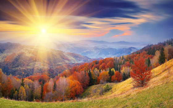 фотообои, rays, солнца, стену, лесу, sun, trees, заказать, осень, лес, небо,