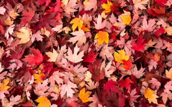 pinterest, осень, листва, кленовые, разноцветные, bokeh, праздник, pin,