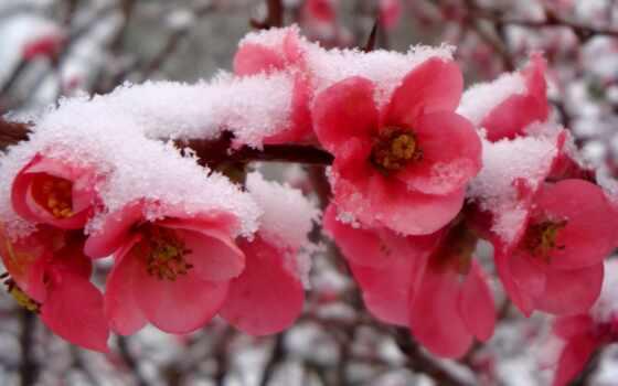 come, one, вставать, love, цветы, далеко, winter, past, дождь, отображаться