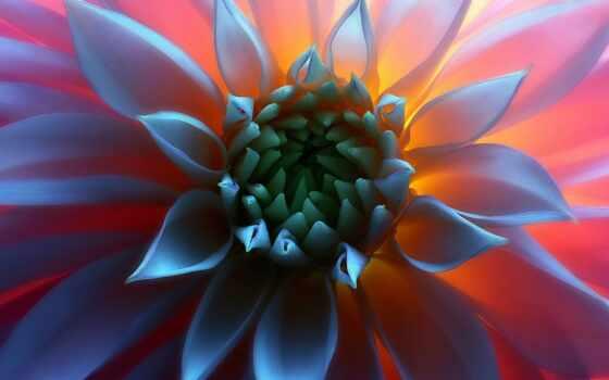 цветы, красивый, красавица, louie, rochon, фото, makryi, one, unusual, миро