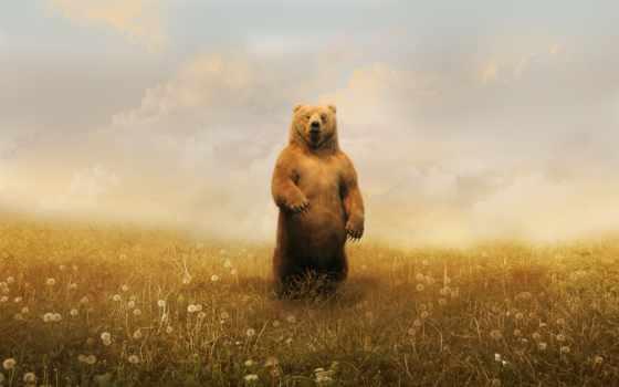 медведь, одуванчики