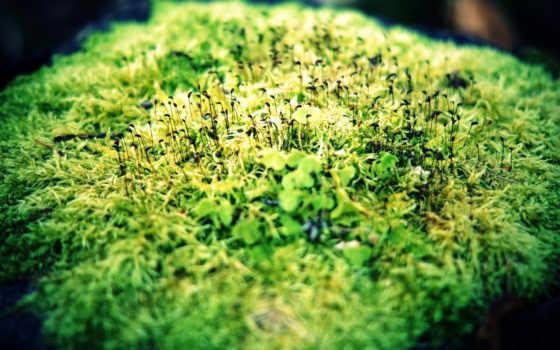 зелень, макро