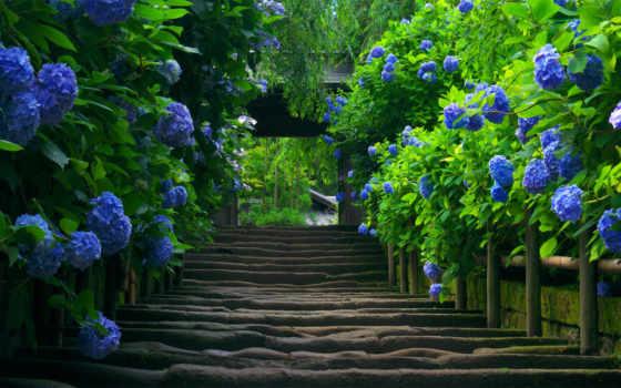 priroda, природы, лестница