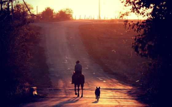 лошадь, собака, zakat