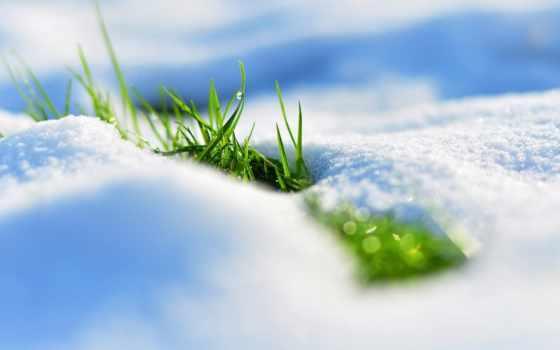 весна, снег, трава