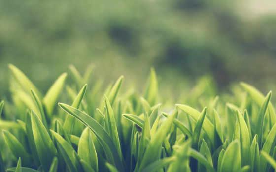 depth, резкости, поле, макро, природа, трава, янв,