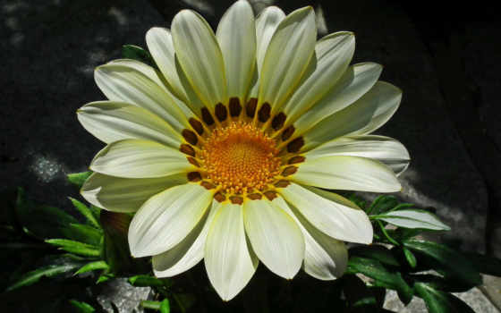 цветы, цветочная, красавица