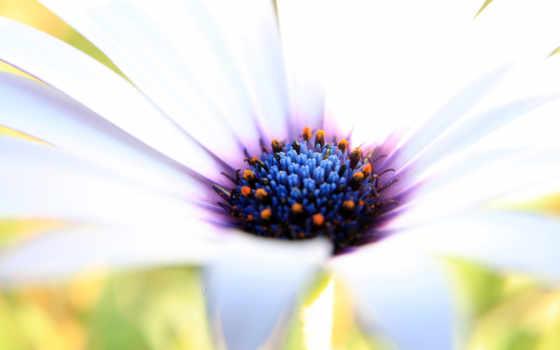 красивые, цветы, картинка
