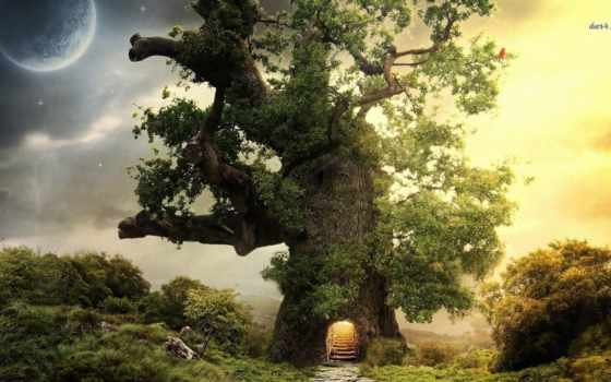 дерево, fantasy, house, see, дуб, pinterest, об, more,