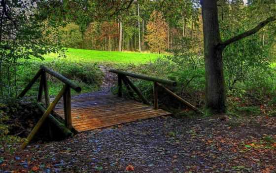 puente, bosque, fondos