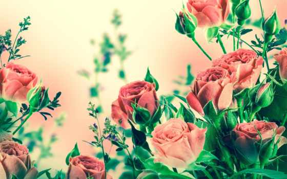 красивые, живые, cvety, телефон, телефона, цветов, экран, полная, экрана, flowers,