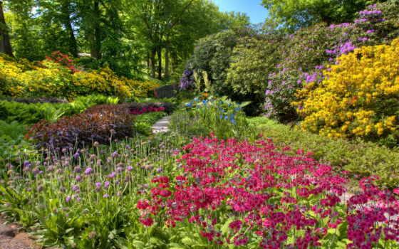 garden, cvety, summer, you,