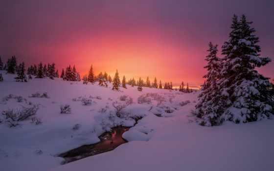 природа, winter, снег, небо, закат, красивый, trees, fir