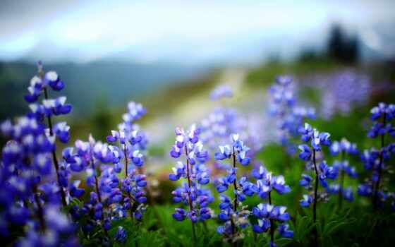 цветы, растение, листья