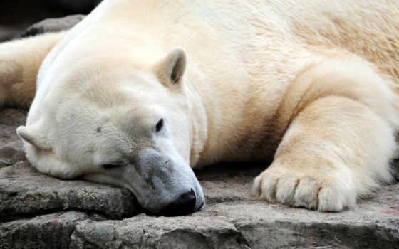 медведь, white Фон № 100430 разрешение 1920x1200