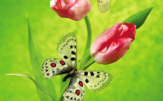 martha, весны, весна