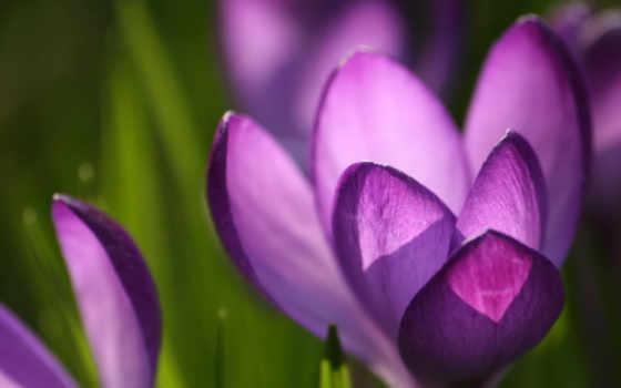 world, цветов, без, цветы, фотообои, стал, обсуждение, фотографий, liveinternet, подборка,
