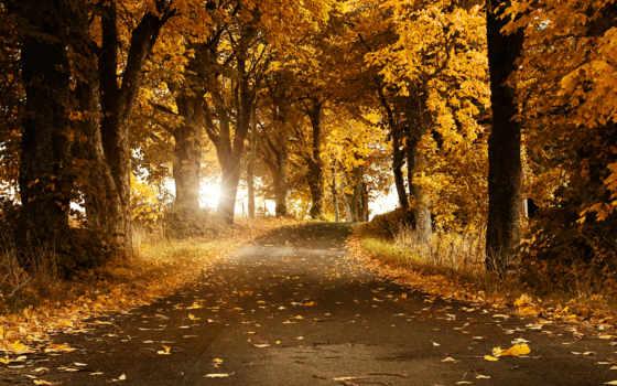 осень, листва, дорога, телефон, trees, планшетный, золотая,