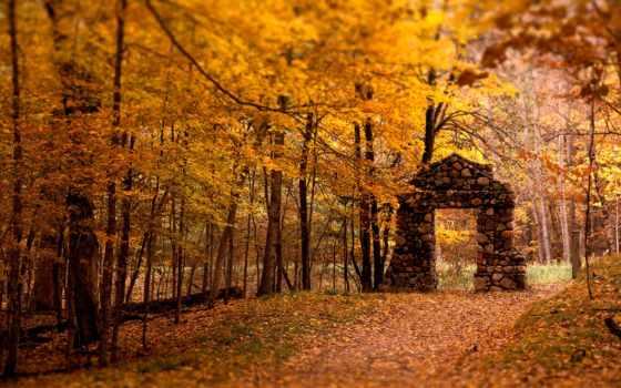 осень, лес, цвете, inspiration, листва, trees, природа,