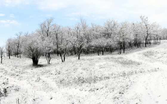 zima, tapety, las, winter, pulpit, природа, pulpitu, nieg,