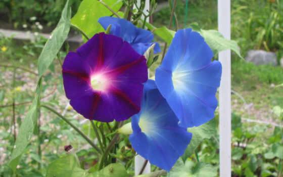 flowers, цветы, full Фон № 149190 разрешение 2000x1500