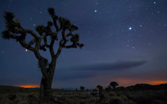 дерево, пустыня, навин, national, park, mexico, california, share, facebook,