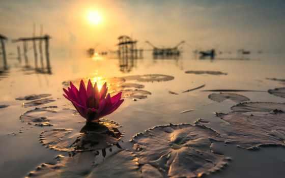 lotus, water, цветы, пруд, reservoir, вечер, закат, отражение, свет,