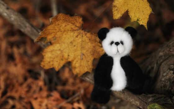 медведь, осень, leaf, toy, панда, лист, тематика, дерево