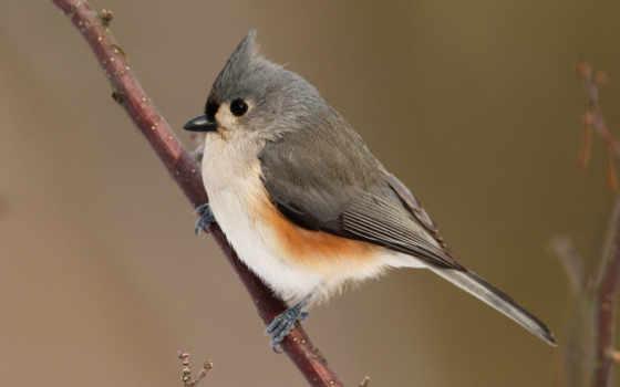 bird, desktop