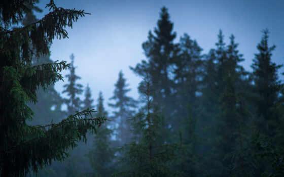 природа, красивые Фон № 22529 разрешение 2048x1365