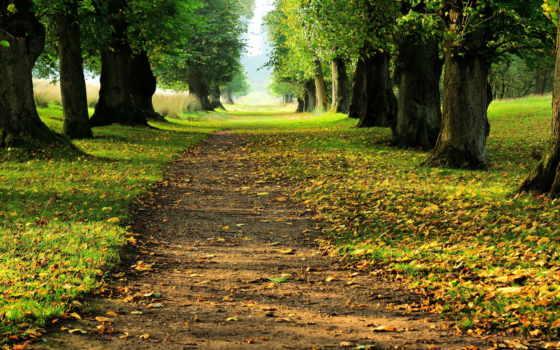 path, through