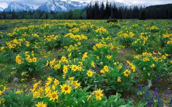 flores, paisaje, con