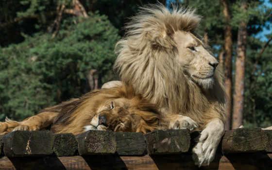 world, animal Фон № 107903 разрешение 1998x1152