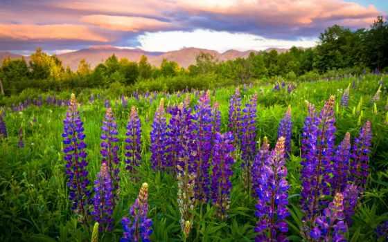 цветы, луговые, названия