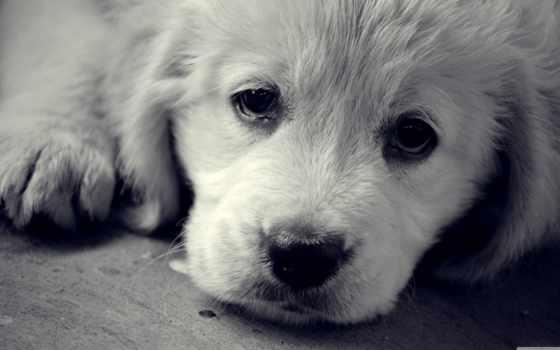 свет, грустный, eyes, грустные, собаки, favorites, mac, favorited, favorite,