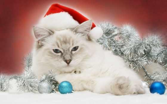 новогодние, телефон, zhivotnye, кошки, животными, картинку, дек, анимашки, новый год, коты, new,